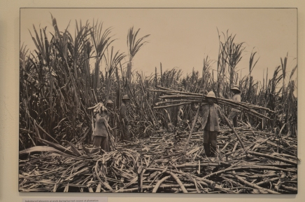 The sugar workers
