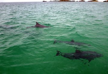 Bottlenose dolphins spend most of their time within two meters under the water surface.