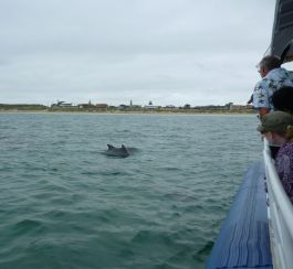 Boats go slow to prevent hitting the dolphins.