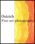 Ostrich logo