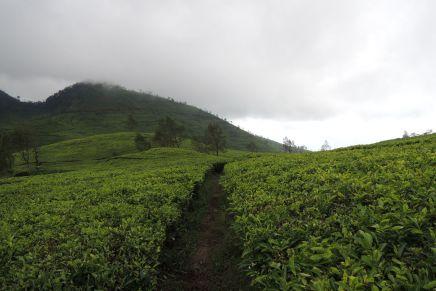 Hidden tea hills